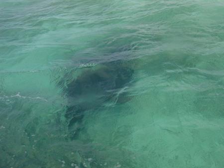 bahamas_andros_island_sinije_diri